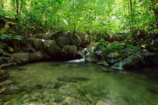 Biosfera de la Sierra de Manantlán