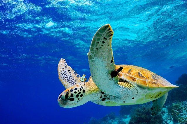 Liberación de tortugas marinas en Puerto Vallarta
