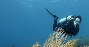 Animate a explorar las profundidades del mar en tu viaje a Punta Mita