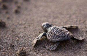 Mayto, una reserva ecológica de tortugas para visitar en tu viaje por Vallarta