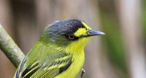 Sierra de Vallejo una exquisita diversidad de aves para contemplar en las cercanias de Nuevo Vallarta