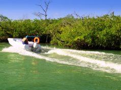 Enjoy the adventure ingredients of the Sunrise Marine Jungle tour