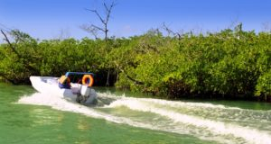 Enjoy the adventure ingredients of the Sunrise Marine Jungle tour
