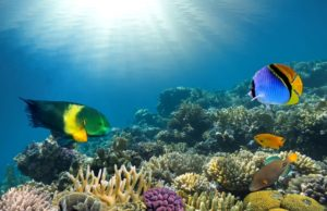 Dive into The Watery World that Surrounds Cancun