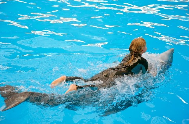 Swim with Dolphins While Enjoying your Vacation