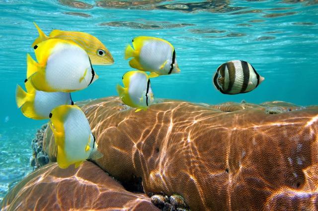 21aaf4d5d1794 De Cancun a Isla Cozumel  un recorrido repleto de atractivos naturales