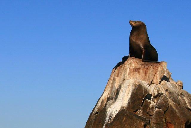 Aventura con leones marinos en Nuevo Vallarta, conoce las criaturas mas juguetonas del mar