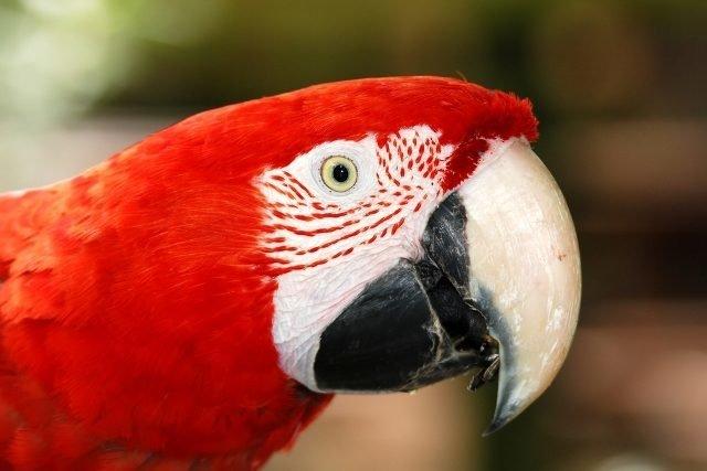 Conoce el Parque Zoologico del Centenario en tu viaje a Merida