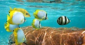 De Cancun a Isla Cozumel un recorrido repleto de atractivos naturales